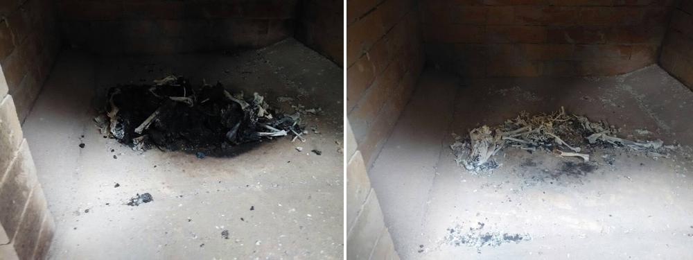 animal cremation
